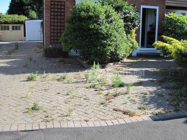 significant weed growth on block paved drive
